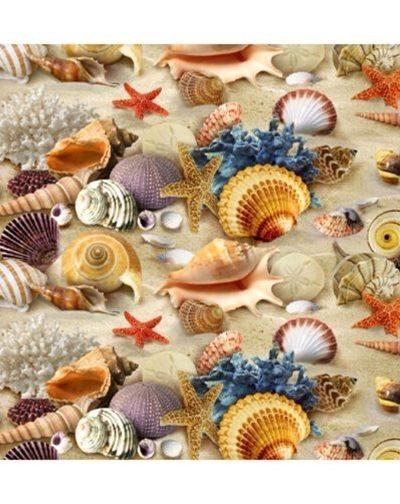 SeaShells-Ocean Beach Summer Shells Starfish