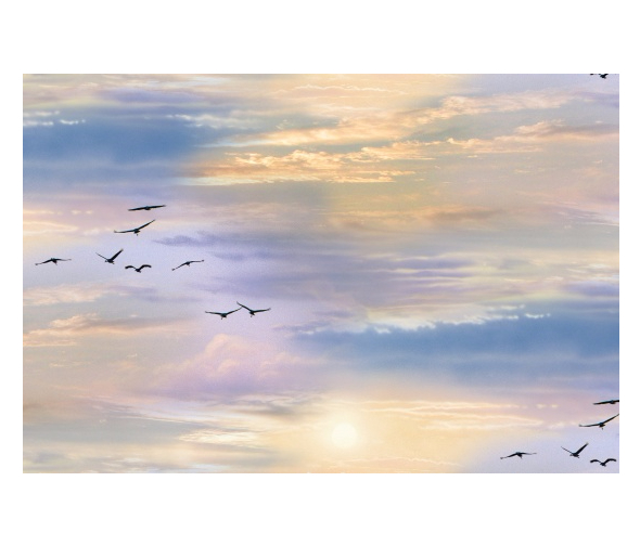 birds and sky landscape in sunrise